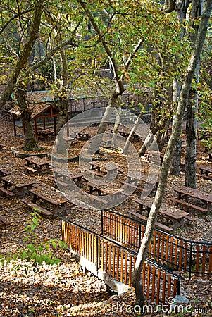 Oak forest picnic site