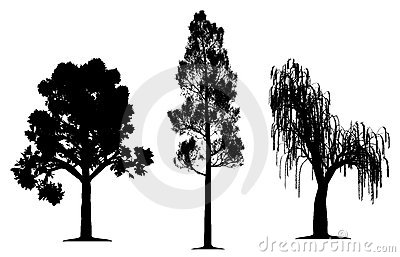 Oak, forest pine and weeping willow tree