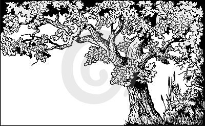 Oak frame vector