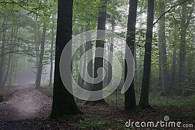 Oak and hornbeam trees against light of morning