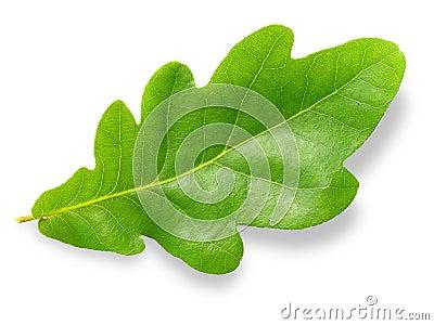 Oak leaf.