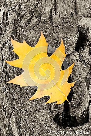 Free Oak Leaf Royalty Free Stock Image - 2638626