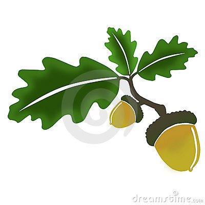 Free Oak, Leaves And Acorn Royalty Free Stock Photo - 9152355