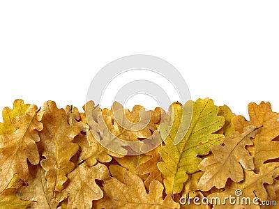 Oak leaves border
