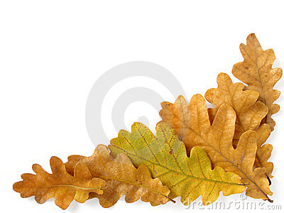 Oak leaves corner