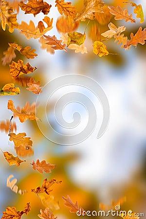 Oak leaves foliage