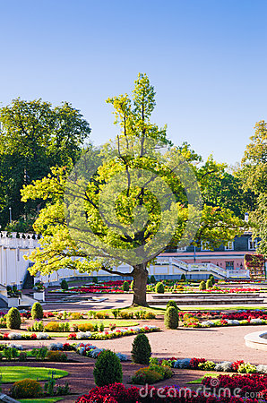 Free Oak Of Times Of Great Peter In Park Kadriorg Stock Photos - 32916063
