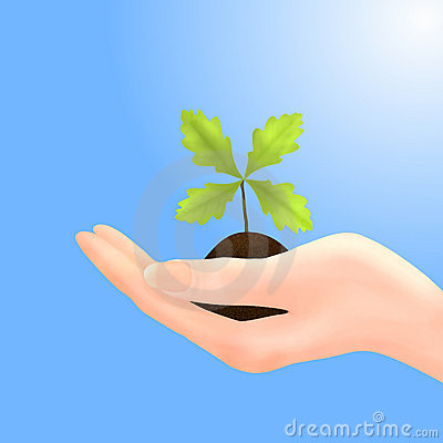 Oak Sapling in Hand with Blue Sky