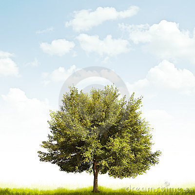 Free Oak Tree Royalty Free Stock Photo - 12295015