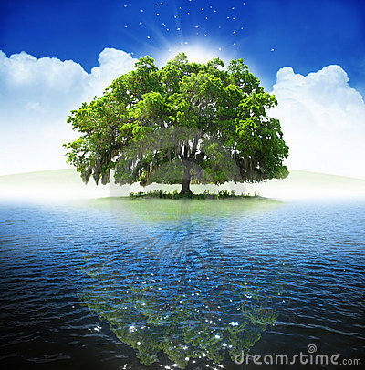 Free Oak Tree Royalty Free Stock Photography - 5653067