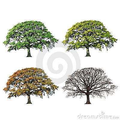 Free Oak Tree Abstract Four Seasons Royalty Free Stock Photos - 7770528
