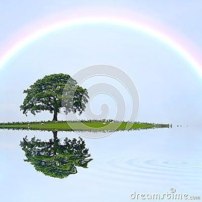 Free Oak Tree And Rainbow Royalty Free Stock Photos - 8430018