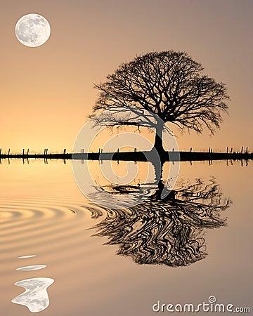 Free Oak Tree At Sunset Royalty Free Stock Photography - 7413537