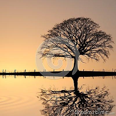Free Oak Tree At Sunset Stock Photography - 8242162