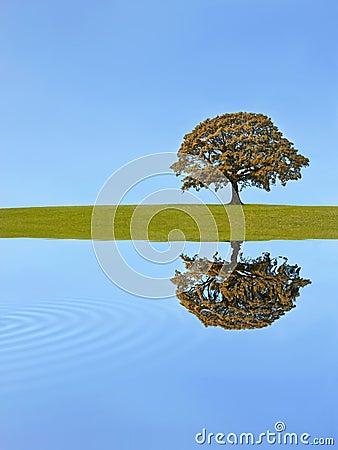 Free Oak Tree Autumn Royalty Free Stock Photos - 8333768