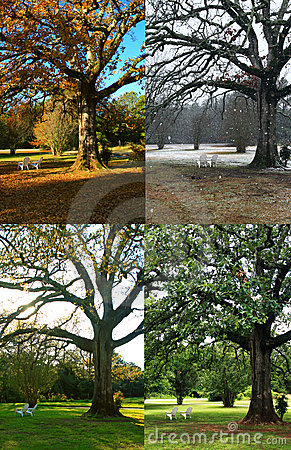 Free Oak Tree In Four Seasons Stock Photos - 5662303