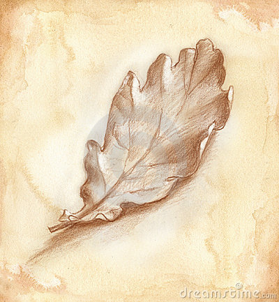 Oak-tree leaf