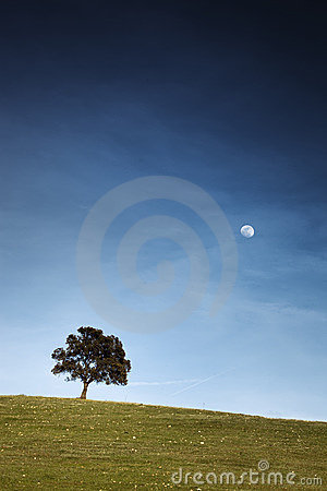The oak tree that looked at the moon