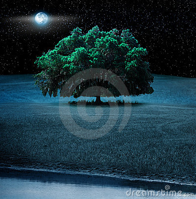 Oak tree at night