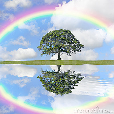 Oak Tree and Rainbow