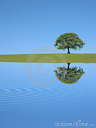 Free Oak Tree Reflection Royalty Free Stock Photography - 6363227