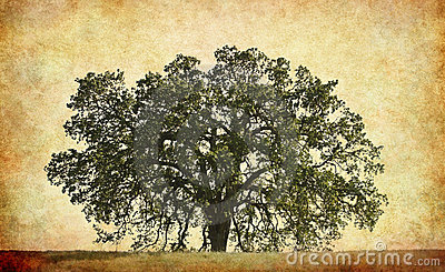 Oak Tree with Texture Background