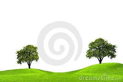 Oak trees in green field