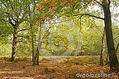 Oak trees and moor