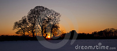 Oak Trees Silhouetted by the Sunset