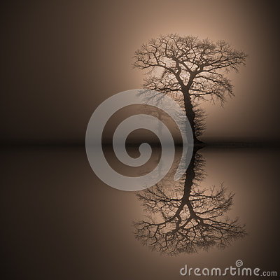 Oak Trees in thick fog reflected in water