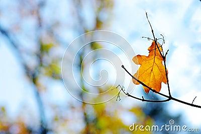oaks leafs on the branch