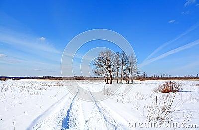 Oaks near winter of the road
