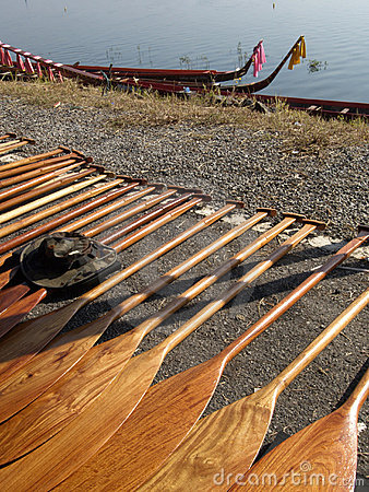 Oars for a dragonboat competition