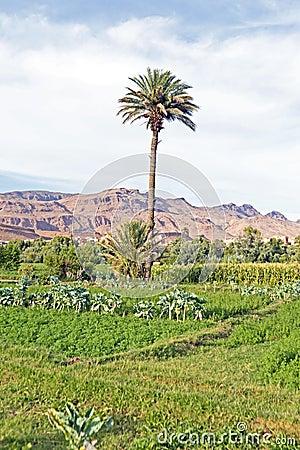 Oas i öknen i Marocko