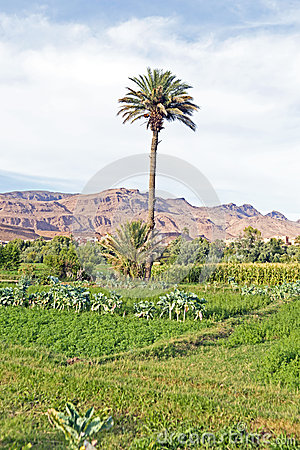 Oase in der Wüste in Marokko
