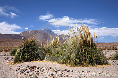 Oasis in Atacama desert