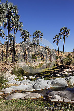 Oasis - Damaraland - Namibia