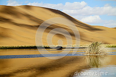 oasis and dune
