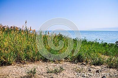 Oasis near the Dead Sea