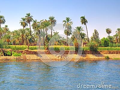 Oasis beside Nile river