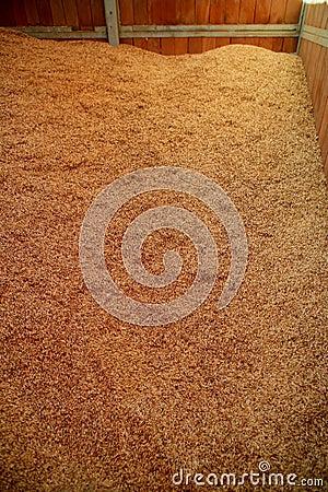Oat cereal grain texture  selective focus