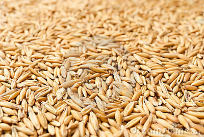 Oat grains as background, shallow dof