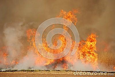 Oat Stubble Fire