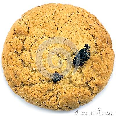 Oatmeal raisin cookie macro closeup isolated