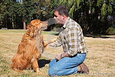 Obedience Training Golden Retriever