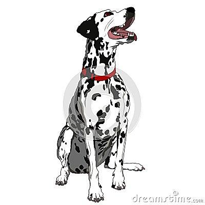 Obedient Dalmatian