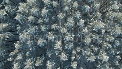 Oberhalb des Flyover Shot of Winter Spruce and Pine Forest Rime ice and hoar frost cover bedeckte Bäume Erstaunlicher Winter stock footage