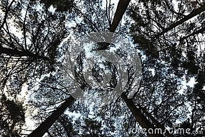 Oberseite des Waldes