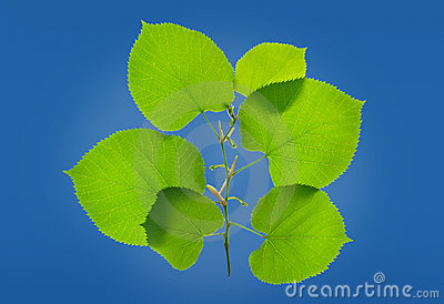 Obfitolistna zielona roślina