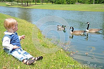Observación del pato
